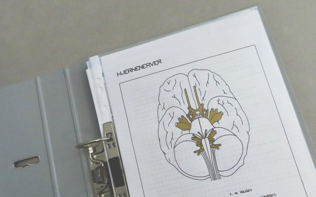mari-johansen-Studietips-anatomi-fysiologi-cingulum