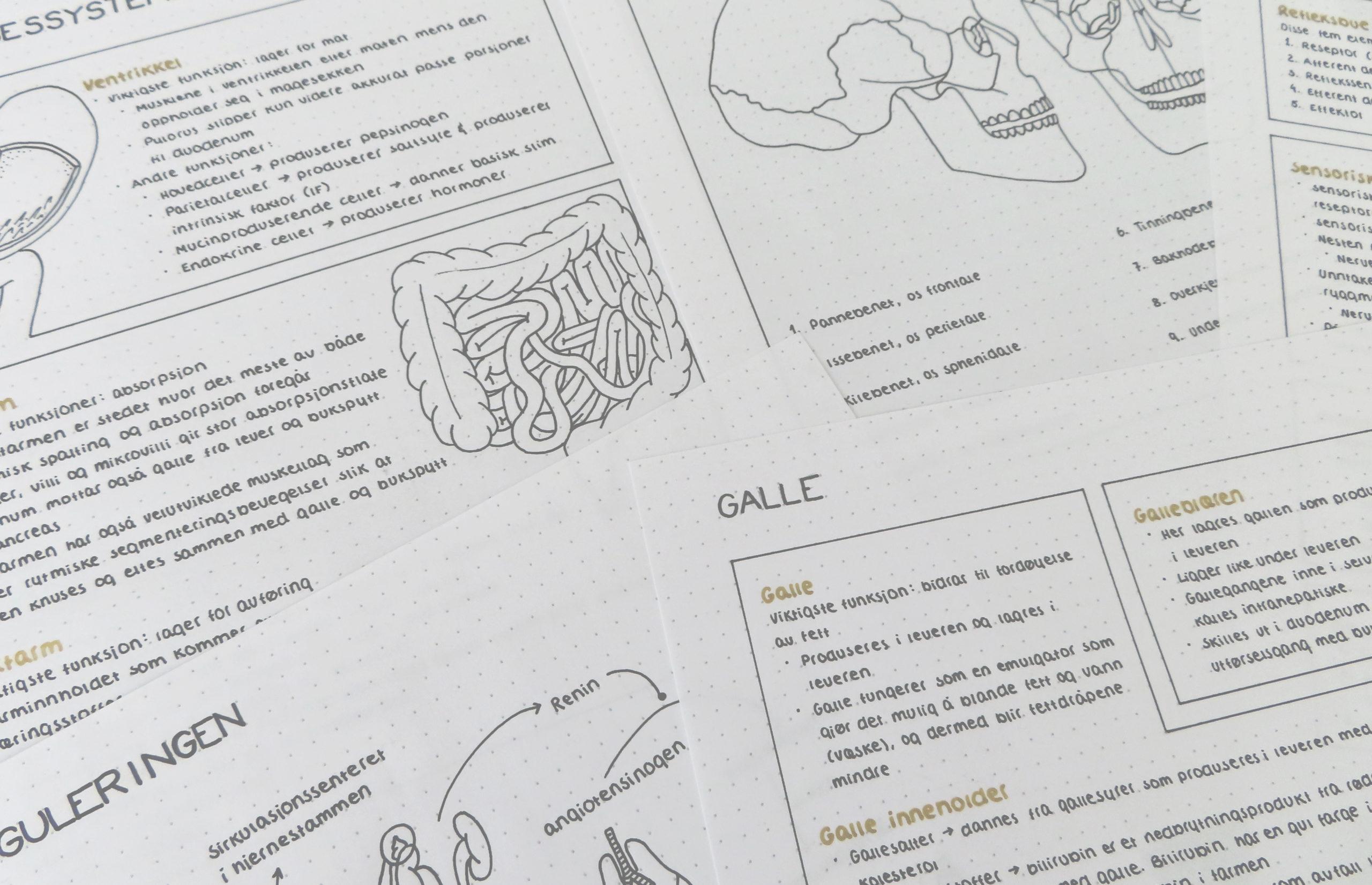 mari-johansen-Studietips-sykepleie-cingulum