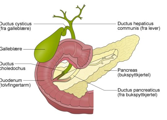 Pankreas-cingulum
